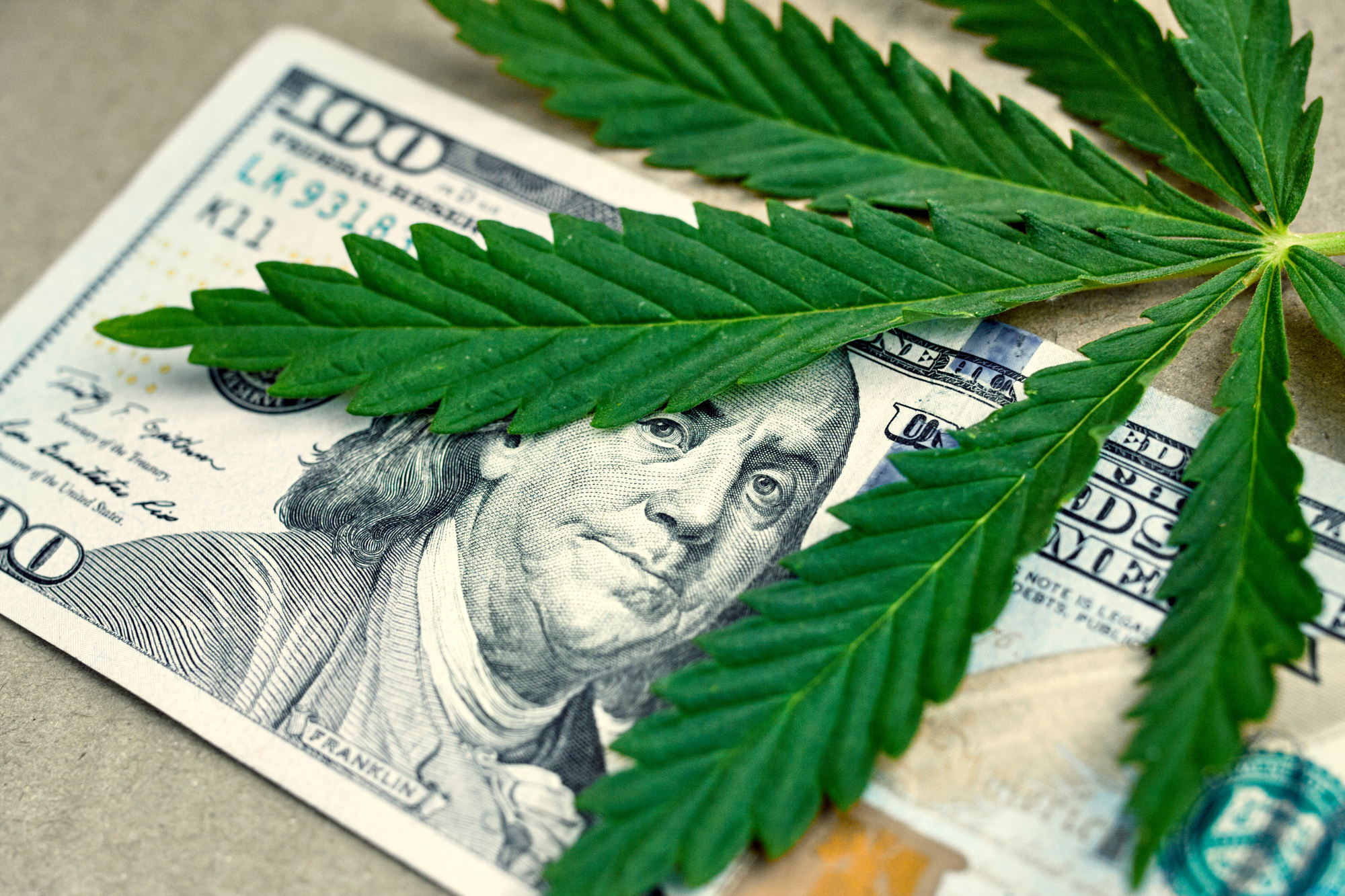 Image result for weed business